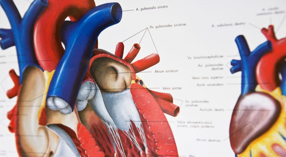 Warum beim Herzinfarkt jede Minute zählt